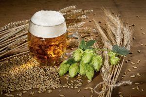 Introducción a la cerveza